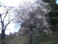 2007hagafuji15