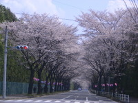 2007kiyoharaharu43