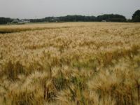 2011hagaran1
