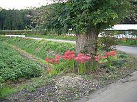 2006kiyohara113