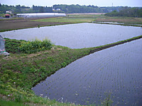 2007kiyohara5uki9