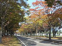 2009kiyohara10
