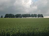 2013asaro8