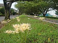 2013ahigan5