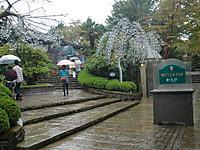 2013hakonegarasu1