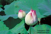 Flower2001